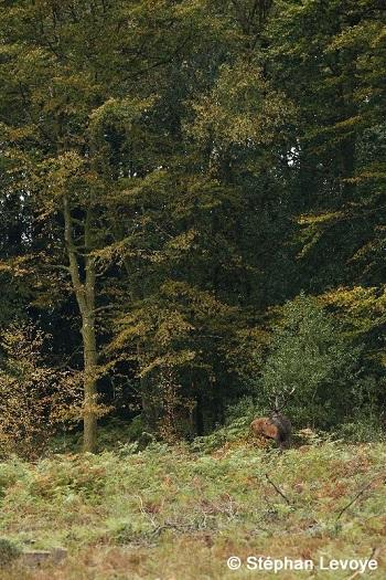 Forêt d`Ecouves