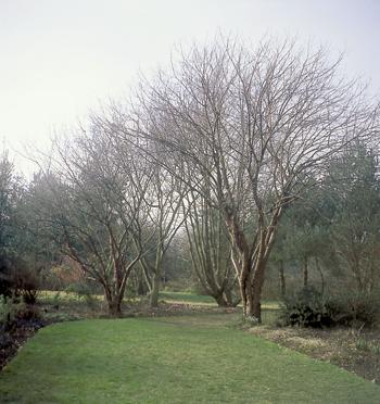 Les jardins de Bellevue sont aussi de vastes aires vallonnées et gazonnées, ouvertes sur la forêt d'Eawy. (Photo Olinda Longuet © Patrimoine Normand.)