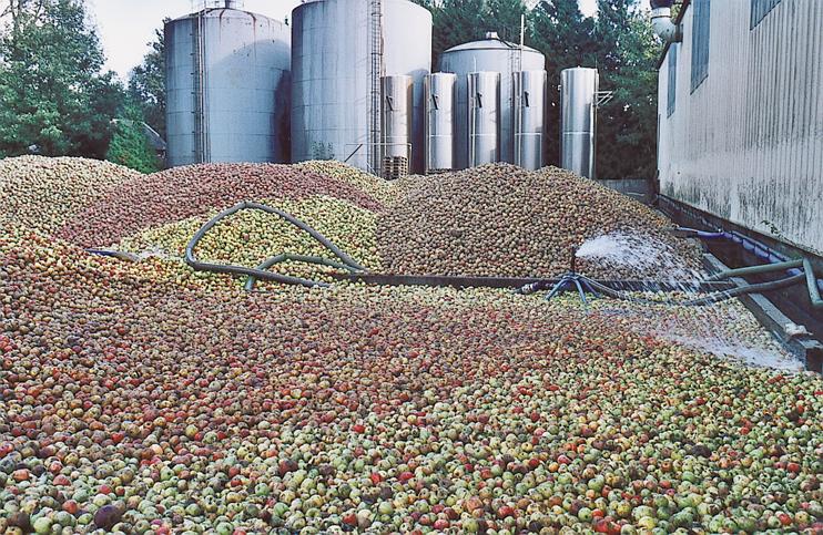 Une sélection rigoureuse des pommes et un lavage au grand jet, devant les bacs à cidre. (Photo Alexandre Vernon © Patrimoine Normand.)